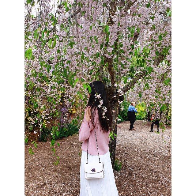 费罗莉花园Fioli樱花🌸盛开