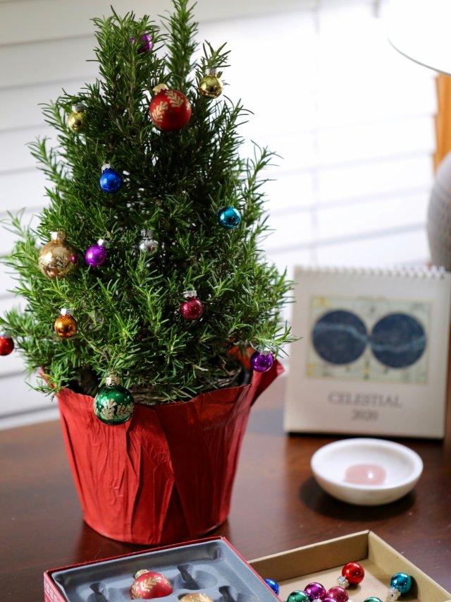 🎄圣诞树—迷迭香版迷你圣诞树