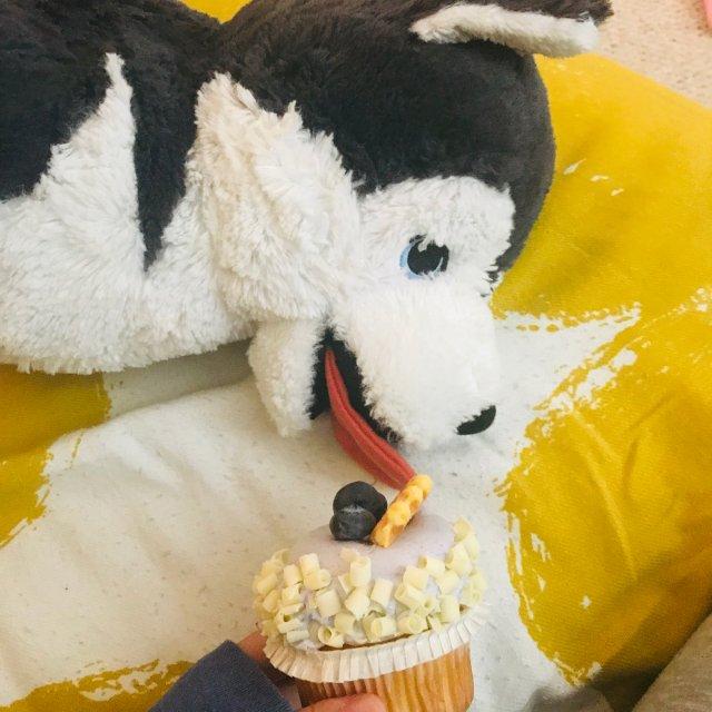 所以小狗可以不可以吃cupcake呢 ❌