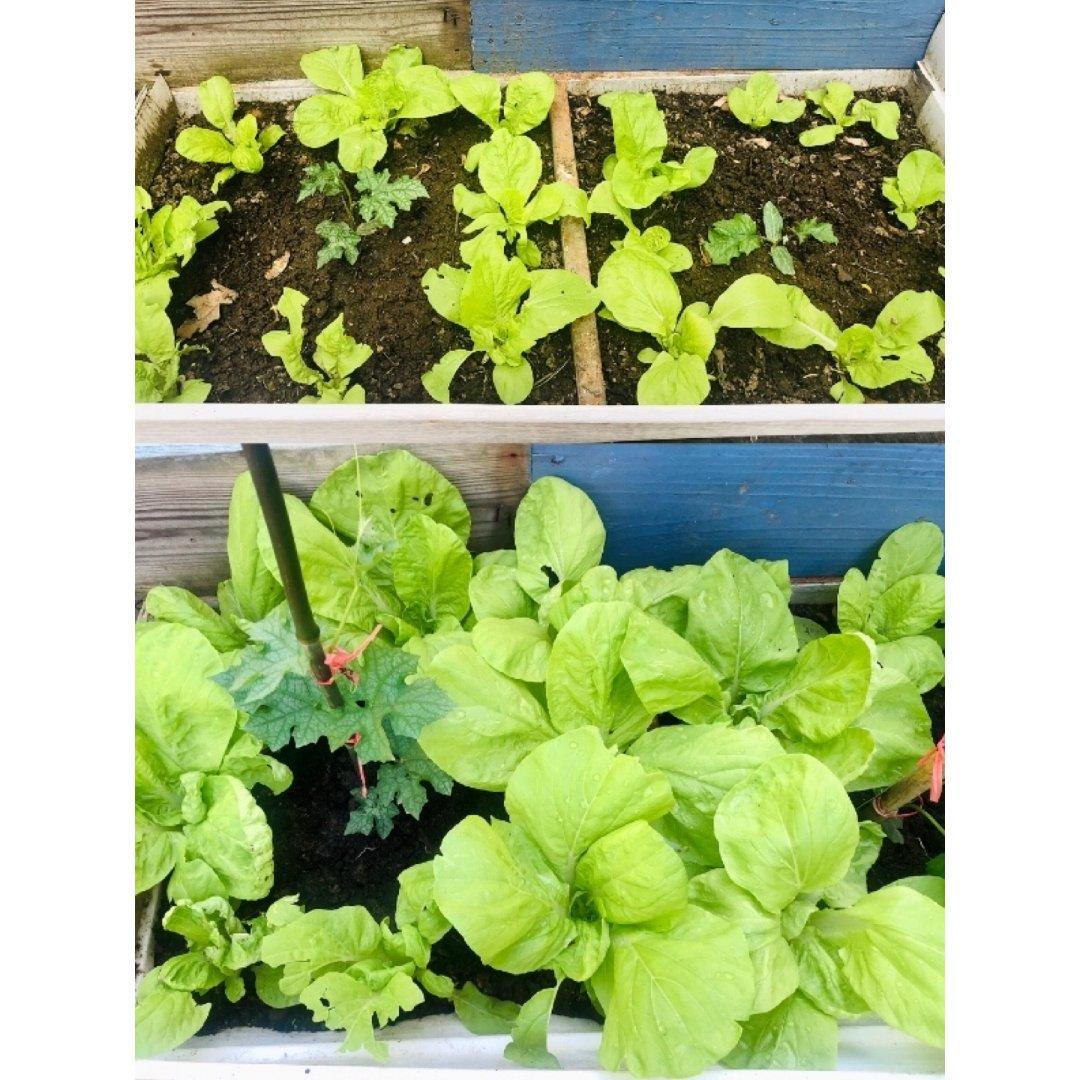 👩🏻 的绿色小菜园 🥬