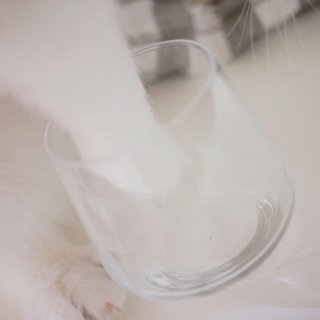 抢不到星巴克猫爪杯,那来个樱花杯吧🌸...