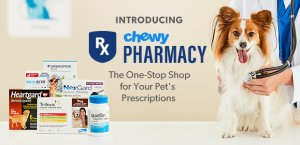 Pet Food, Products, Supplies at Low Prices - Free Shipping | Chewy.com