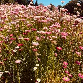 春天在哪里,australian botanic garden