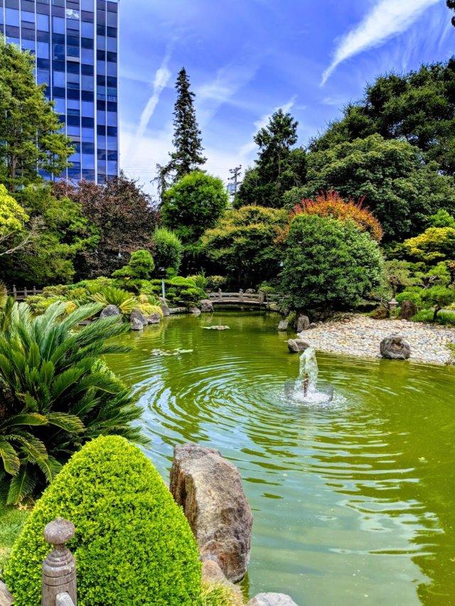 11.11-9-11【日本花园】