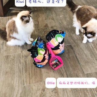 🏅微众测 | Neon Litter 霓虹五彩水晶猫砂