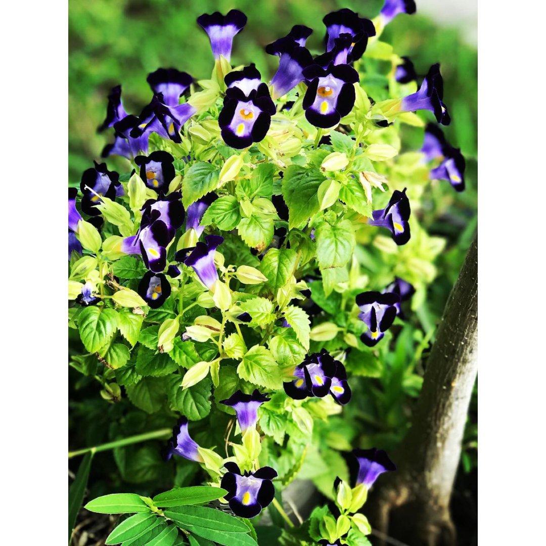 ⏱3-4 紫色花花🌼