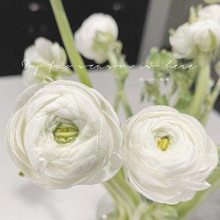 以花为伴|仙气十足、干净气质的洋牡丹🤍附...