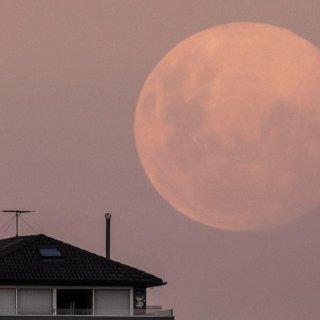 美哭了 超级粉红月亮 ...