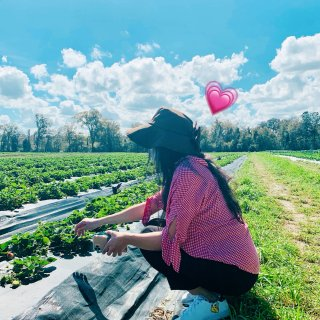 周末去哪里|去农场摘草莓🍓|U-pick...