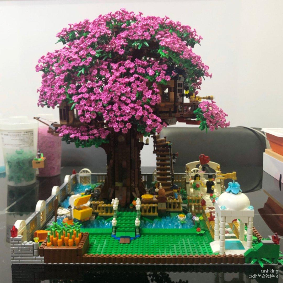 树屋~~一颗期待很久的樱花🌸树