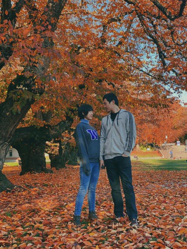 UW的樱花树秋天也美绝了