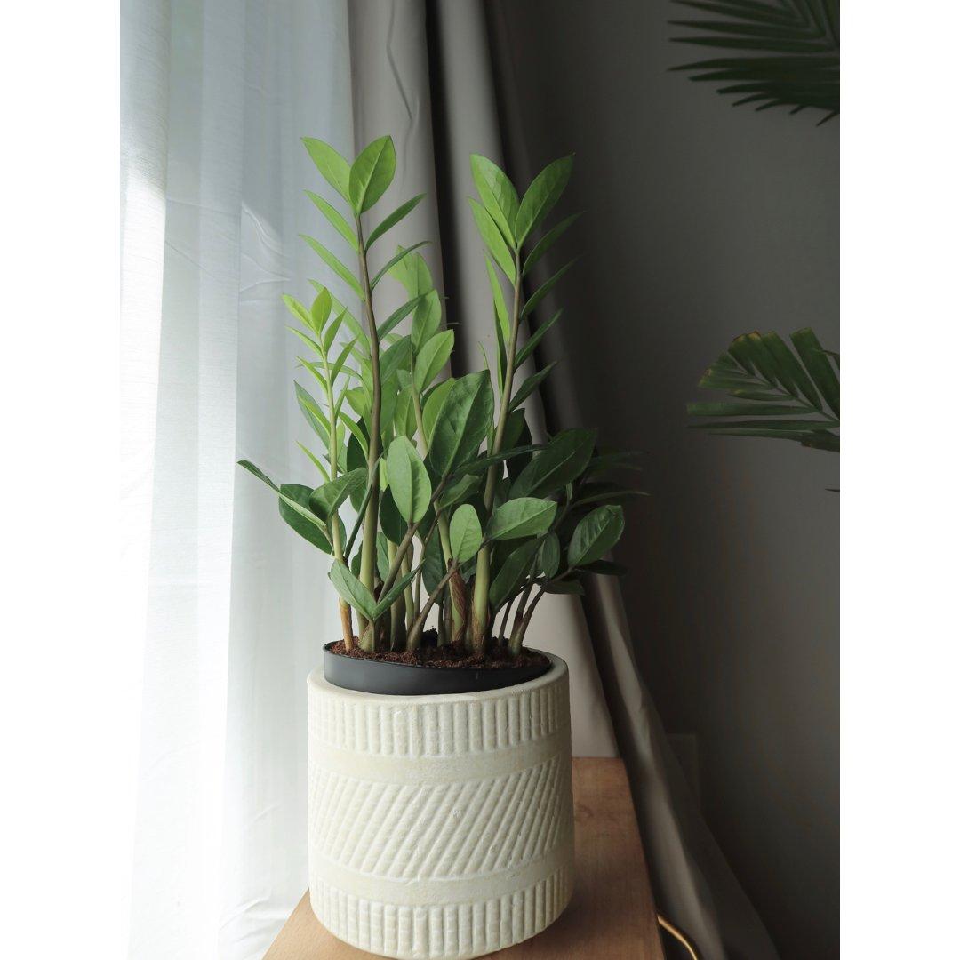 🌿家居绿植  绝对是最好养的绿植了