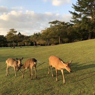 奈良公园🦌 打卡喂小鹿...