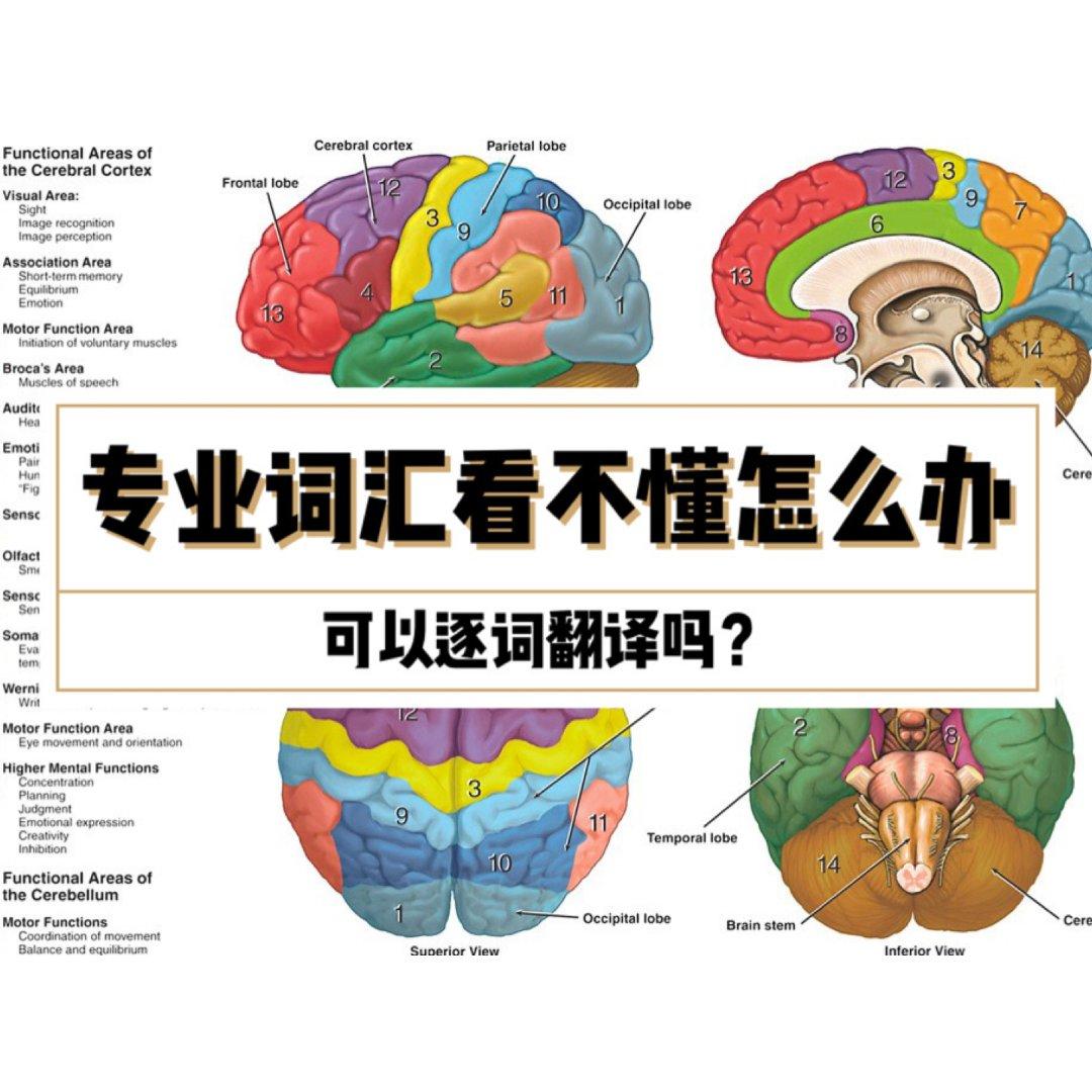 专业词汇看不懂能不能逐词翻译?|留学知识...
