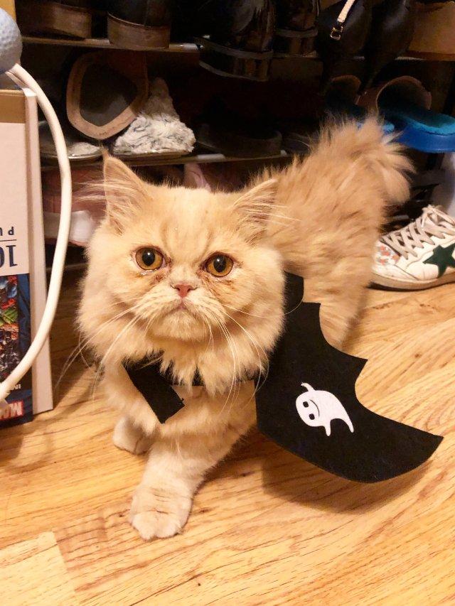 万圣节🎃Costume猫猫篇之-新...