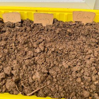 吃完肥牛盒子不要扔,戳几个洞种香草刚好...