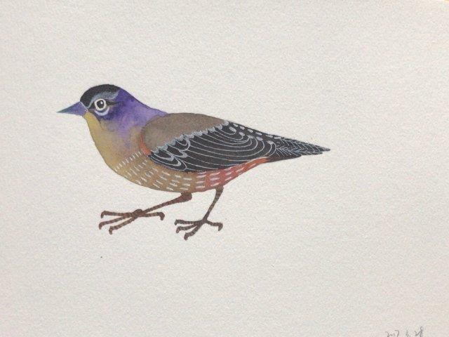 一只小小鸟🐦