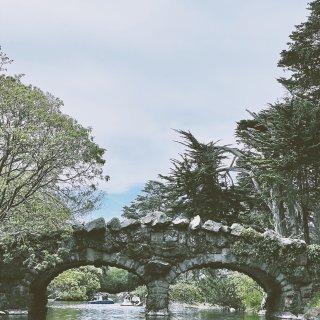金门公园半日游🌸划船赏樱两不误🌸...