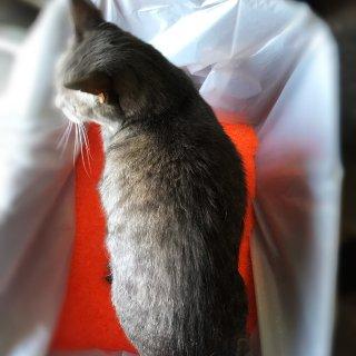 酷炫的✨Neon Litter 水晶猫砂🐱