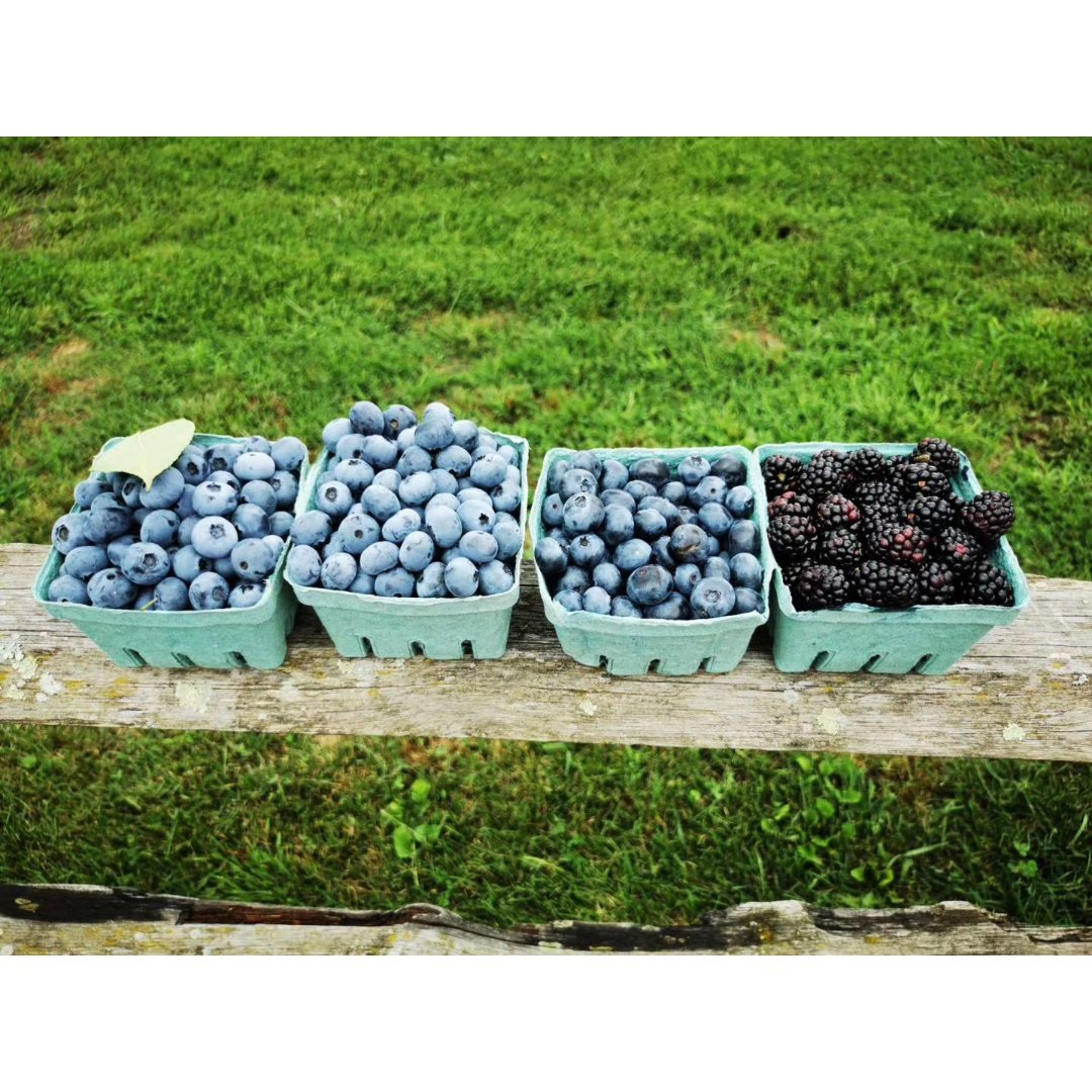 blueberry  11