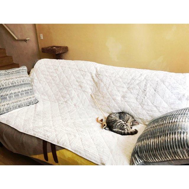 实用家居之沙发保护套,在梅西百货全...