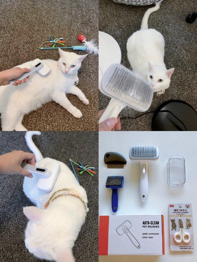抓住猫咪换毛季节的尾巴🐈✨