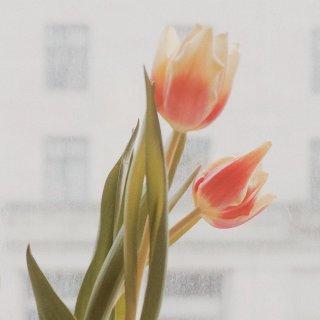 Tesco鲜花促销