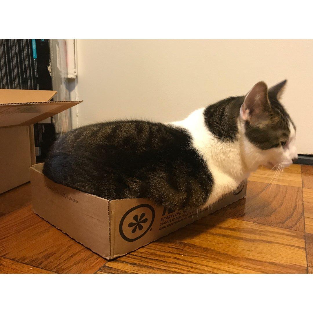 盒子里会长猫