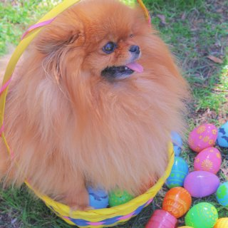 Happy Easter🐰🐶