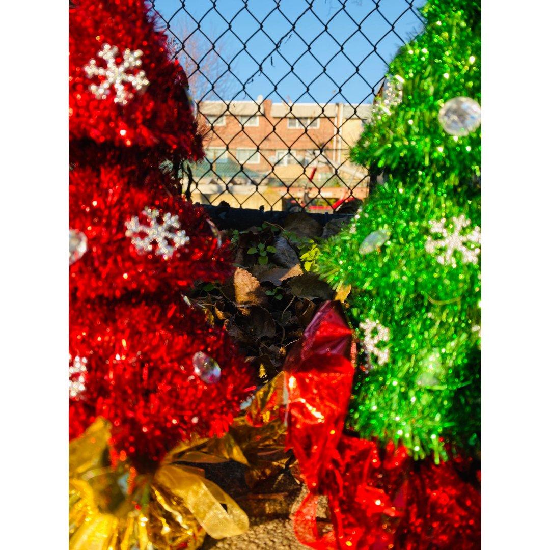 dollar tree圣诞🎄