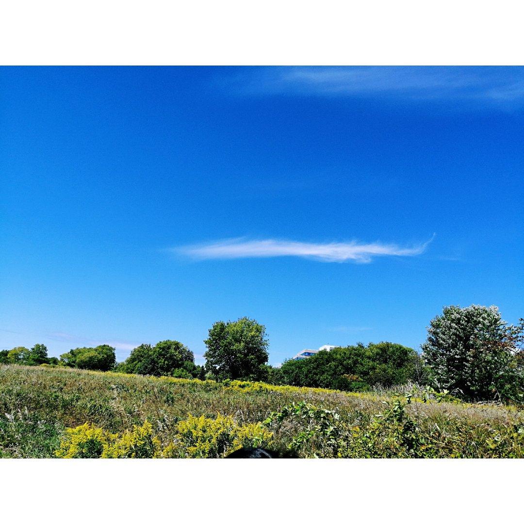 多伦多又一个值得推荐的自然保护区😊