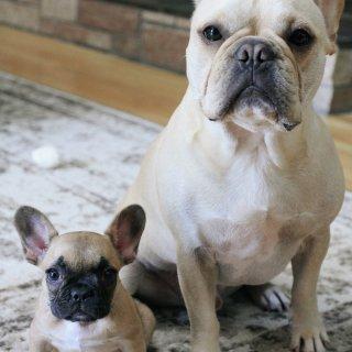 get了新的瘦身大法:养puppy!...