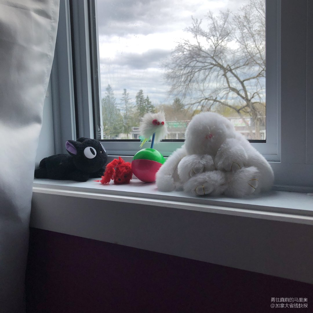 毛孩子喜欢的各种玩具