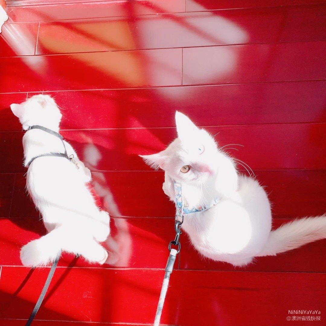 小猫咪在线撒猫粮 第一次见猫还让遛的🐱