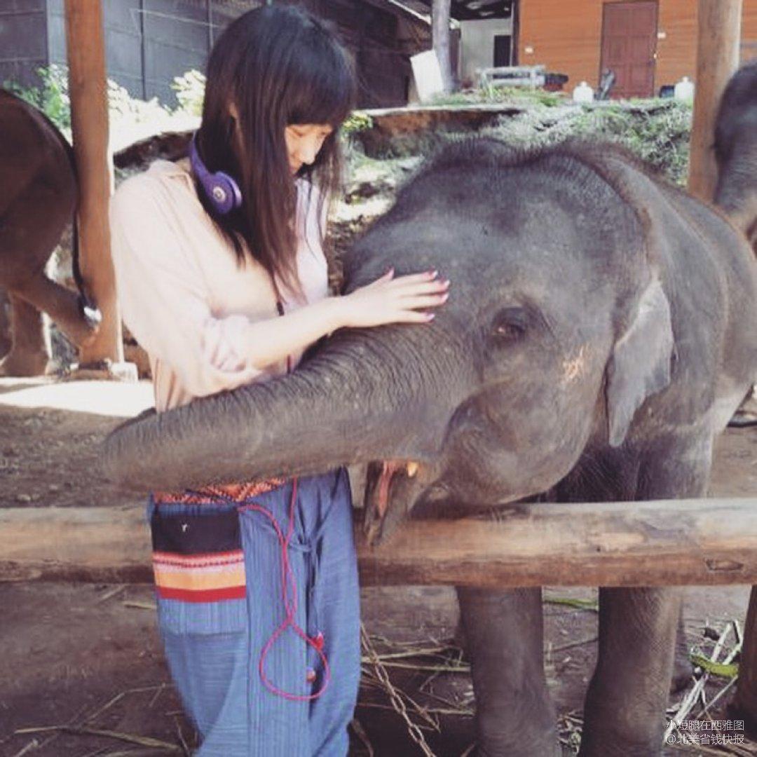 在泰国偶遇超级温柔的小象🐘