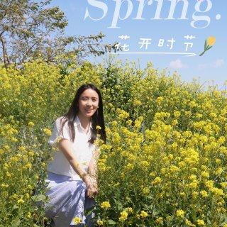 【洛杉矶周边游】花开时节,与你一起邂逅春...