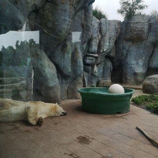 多伦多遛娃好去处 |🐯🦁🐵 多伦多动物园...