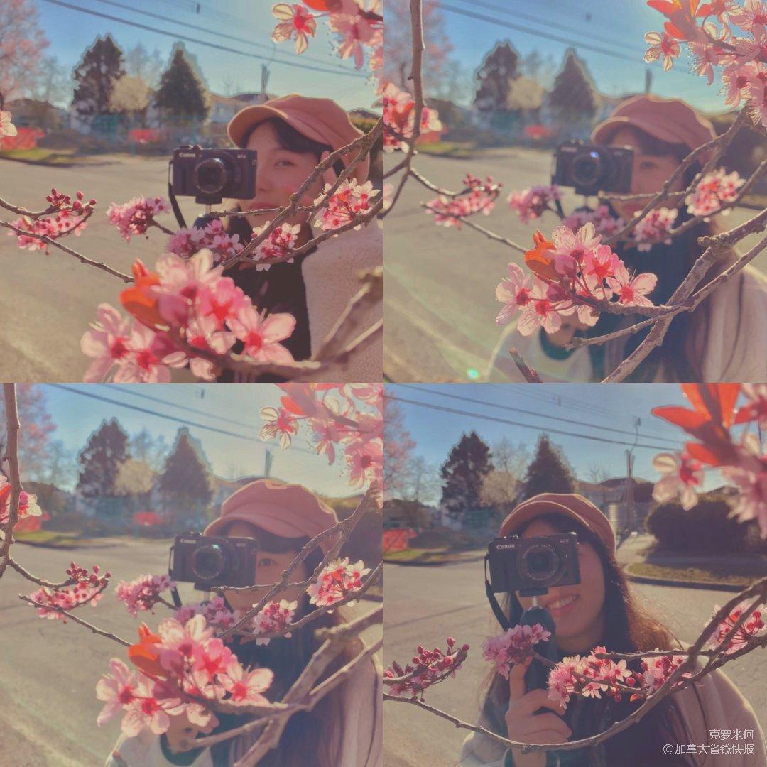 趁着樱花开着 拿着相机出门吧