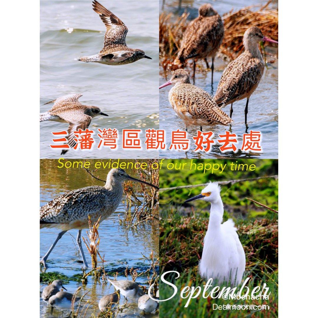 🐦三藩灣區觀賞鳥類保護區🐦...