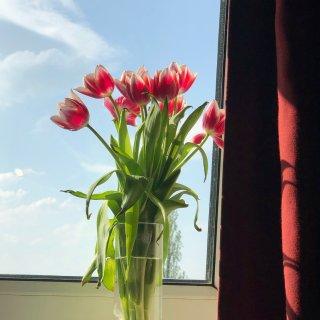 寂寞的日子 让鲜花点亮整个房间💐...