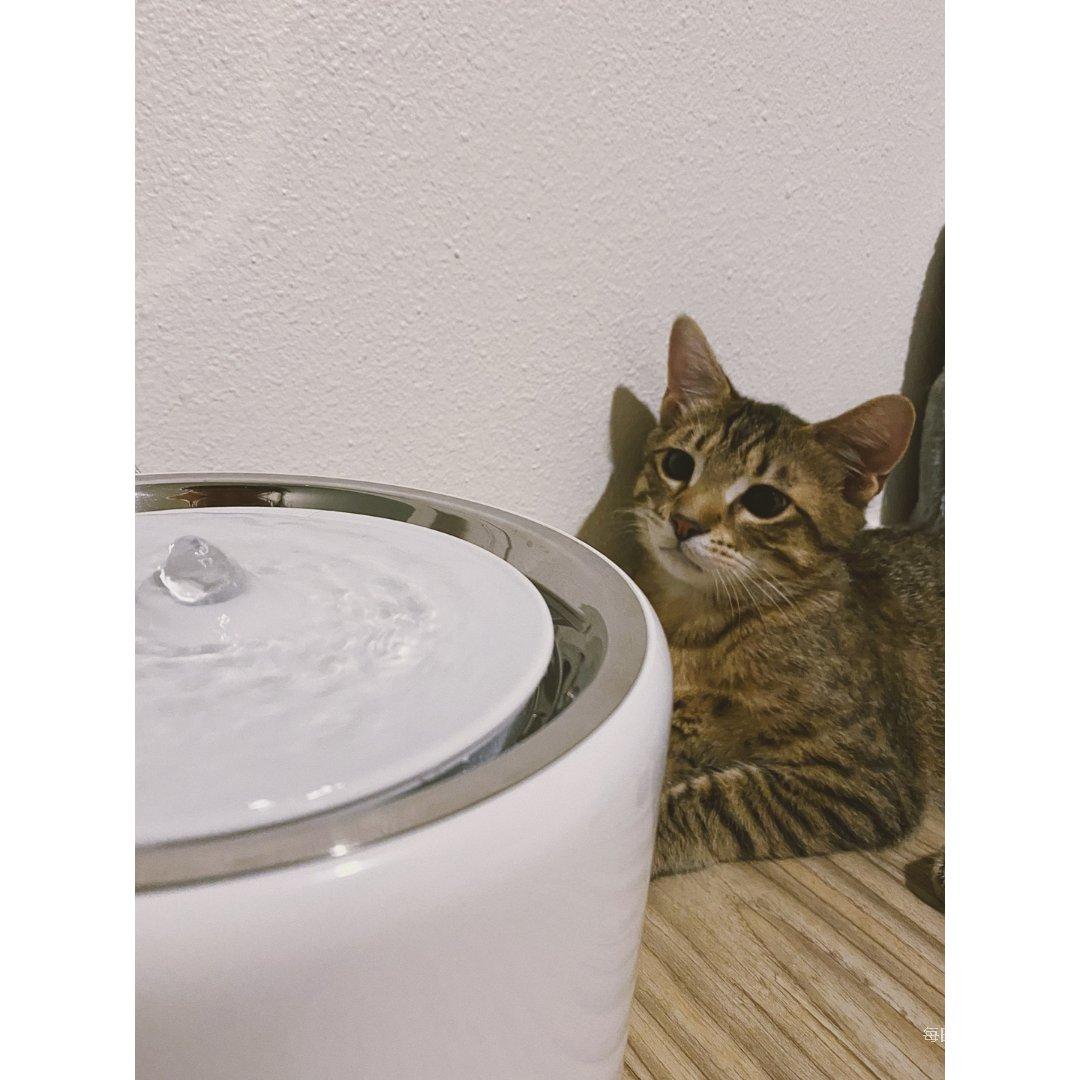 猫咪喝水大作战|饮水机推荐