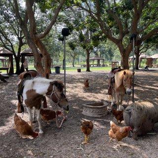 迈阿密遛娃 小农场Pony Ride喂动...