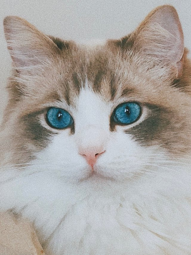 猫咪之ᴏᴄᴇᴀɴ ʙʟᴜᴇ😶