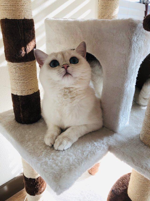 背景2-9 阿猫的盛世美颜