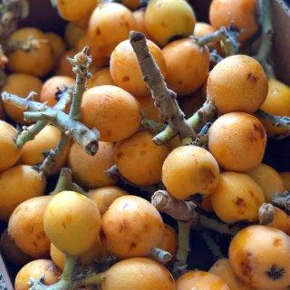 出游 湾区的小伙伴们,摘果子的季节又双叒...