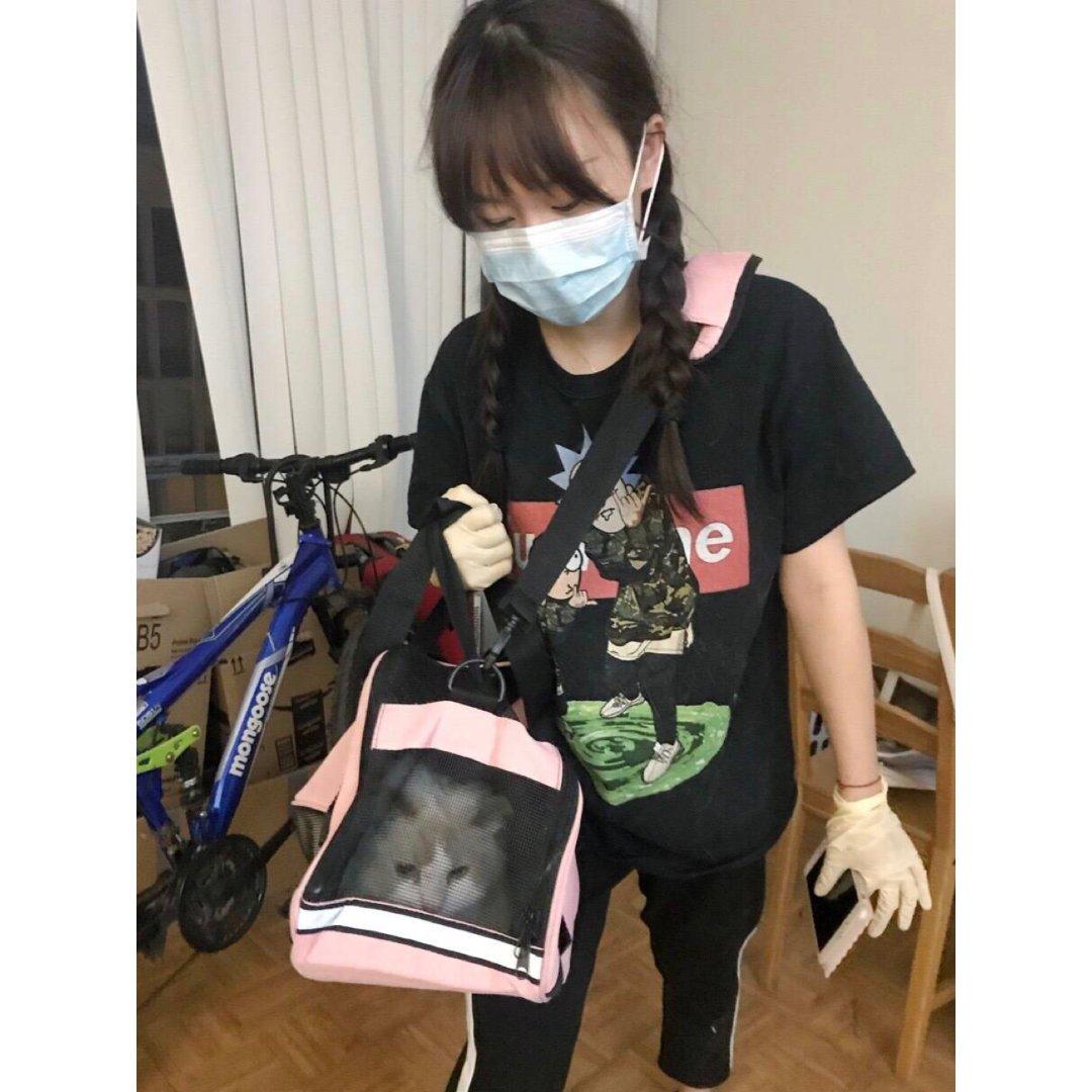【黑五3.5】可爱美丽的天仙布偶猫