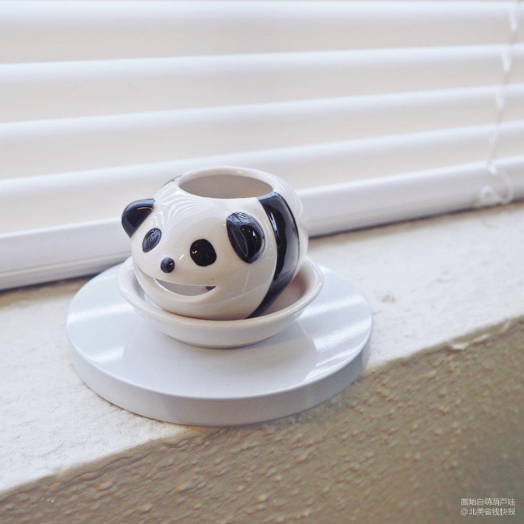小盆友送的熊猫绿植小盆儿