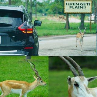 迈阿密遛娃 Drive-Thru动物世界...