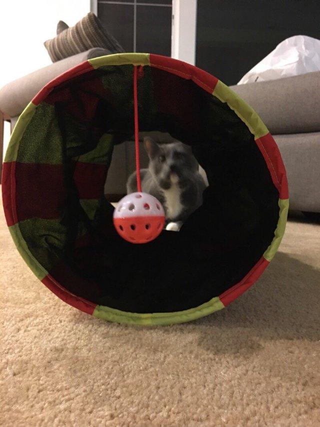 猫咪滚筒玩具