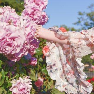 La Vie en rose | J.ING与玫瑰